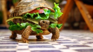 abstract_digital_art_photo_manipulation_sandwiches_tortoises_m86073
